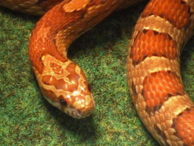 Snake Picture