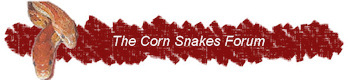 The Corn Snakes Forum